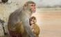 Toate maimuțele de la un centru de cercetare al NASA au fost eutanasiate în aceeași zi anul trecut