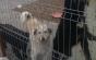 Un bărbat fără adăpost, reţinut în cazul câinelui găsit spânzurat de o ţeavă de gaze a unui imobil din Sectorul 1 al Capitalei