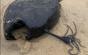 Un peşte cu înfăţişare bizară a apărut inexplicabil pe o plajă din California