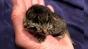Un pisoi s-a născut cu două fețe: Cu o gură mănâncă, iar cu cealaltă miaună