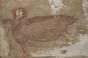 Un porc desenat acum 45.000 de ani în Indonezia ar putea fi cel mai vechi exemplu de artă rupestră