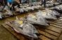 Un ton roşu uriaş a fost vândut cu 193 de milioane de yeni la o licitaţie în Japonia