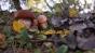Unui bărbat din SUA i-au crescut ciuperci halucinogene în sânge după ce și le-a injectat în vene