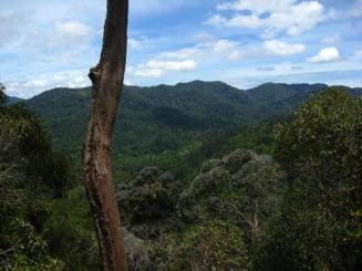 Aproximativ doua treimi din padurile tropicale ale lumii au fost distruse sau degradate de oameni