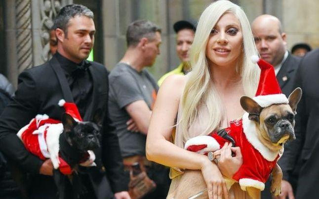 Câinii furaţi ai cântăreţei Lady Gaga au fost recuperaţi nevătămaţi şi înmânaţi Poliţiei din Los Angeles