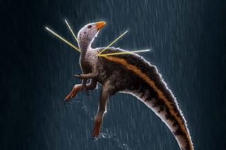 Descoperire isotrică: Oamenii de stiinta au găsit un dinozaur cu ''par'' si ''panglici''