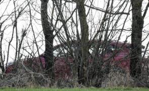 O mamă şi fiica ei de 4 ani găsite împuşcate într-o maşină în apropiere de Viena