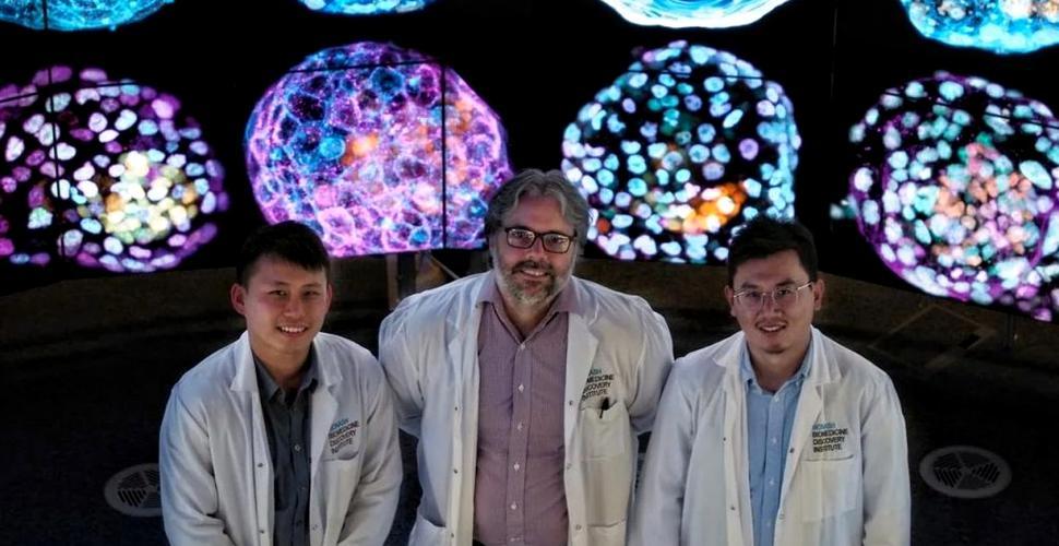 Progres major: Primele modele complete de embrion uman au fost create în laborator