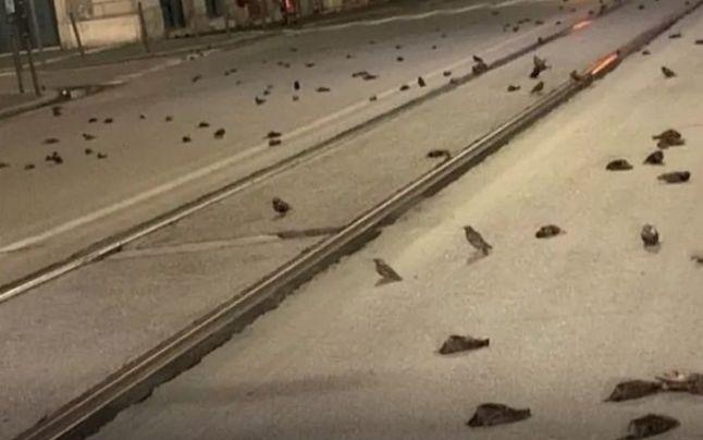 Revelion: Mii de păsări au murit din cauza focurilor de artificii din centrul istoric al Romei
