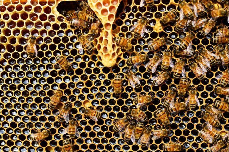 Reziduuri nucleare ale Războiului Rece au fost găsite în mierea de albine și după șase decenii