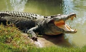 Tarzan din Tanzania a scăpat cu viață după ce s-a luptat două ore cu un crocodil
