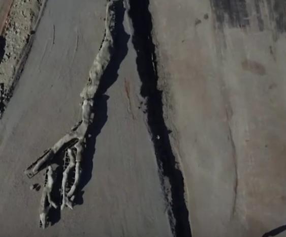 Un copac pietrificat de 20 de milioane de ani a fost găsit cu ramurile și rădăcinile intacte